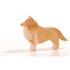 Hund - Collie
