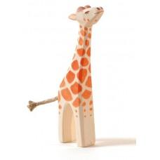 Giraff, unge, huvud upp