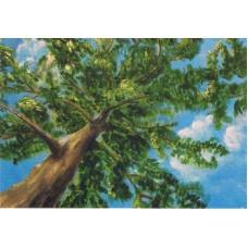 Vykort - M653 - Styrka - Kraftfullt träd