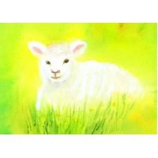 Vykort - R3077 - Vitt lamm