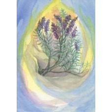 Vykort - W2011 - Lavendel