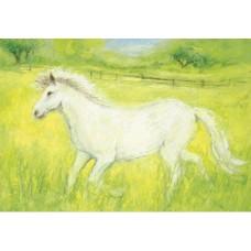 Vykort - MvZ320 - Vit häst